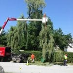 Tommy Trees tree service Orange County NY