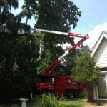 Tommy Trees tree service Chester NY