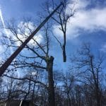 Tommy Trees tree service Monroe NY