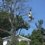 Tommy Trees tree service Goshen NY