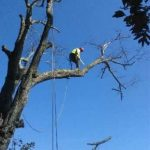 Tommy Trees tree service Goshen  County NY