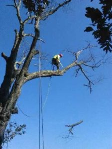 tree removal in New Hampton NY