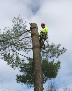 Tree Service | Pine Bush| NY | Tommy Trees Service | 845- 590-9255