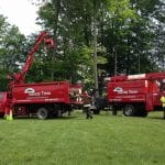 tommy-trees-tree-services-orange-county-ny-1